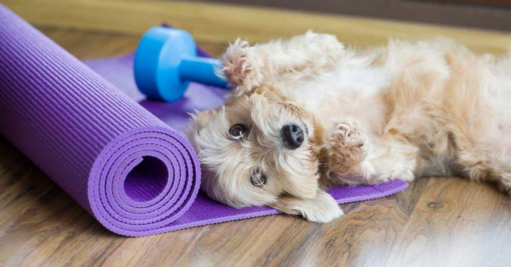 dog yoga singapore