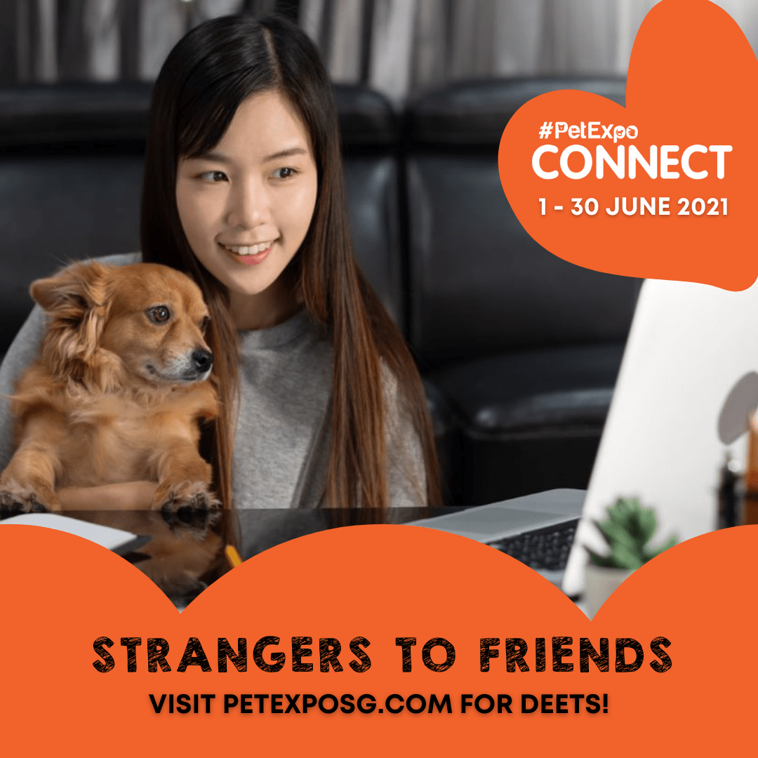 Strangers to Friends Thumbnail