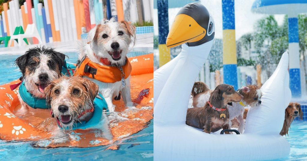 wag and wild water park float