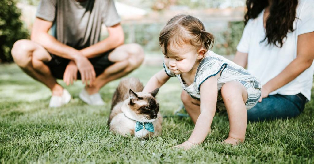 baby playing with cat on grass