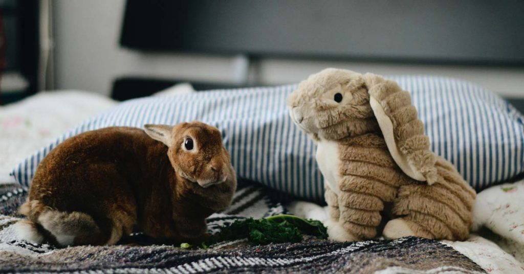 pet rabbit on blanket with toy