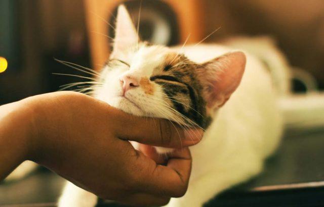 cuddling a cat