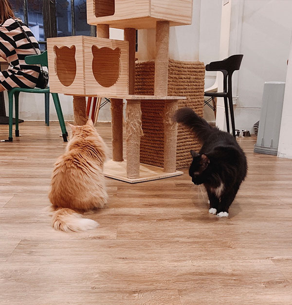 the cat cafe resident cats